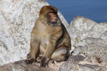 monkey-853263_1920